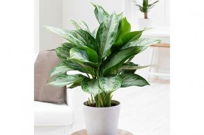 روش های نگهداری بهترین گیاهان آپارتمانی
